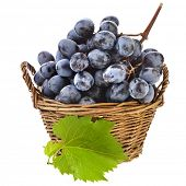 dark grapes in wicker basket isolated on white background