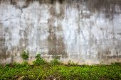 Aged empty wall with green grass