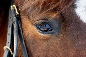 Horse Eye In Dark, Close Up