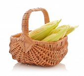 Corn Cobs In Wicker Basket