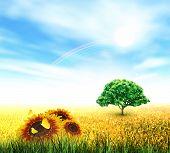 Summer, Field, Sky, Sun, Rainbow, Tree, Grass, Sunflowers