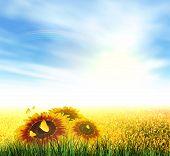 Summer, Field, Sky, Sun, Rainbow, Grass, Sunflowers