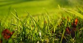 stock photo of dead-line  - lush green grass with dead leaves macro - JPG