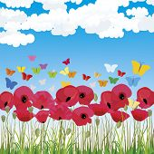 picture of snitch  - Spring meadow with red poppies and sky background - JPG