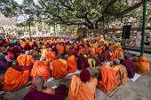 Buddhist Monks Sitting Under The Bodhi Tree, Bodhgaya, India