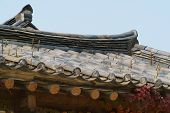 picture of plant species  - orostachys species plants on a korean traditional tiled roof - JPG