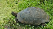 stock photo of tortoise  - The Gal - JPG