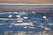 Flamingos at the mountain lake of Salar de Uyuni