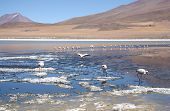 Mountain lake with flamingos in Bolivia