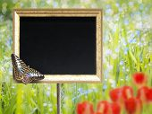 Chalkboard With Butterfly