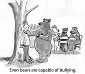 Bear Bully