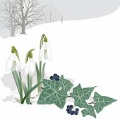 Landscape with Snowdrops and Ivy - Background