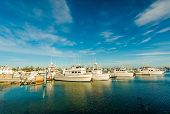 picture of marina  - Marina in San Diego North Bay California United States - JPG