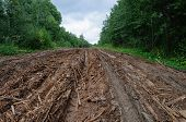 Wet Dirt Road With Piles Of Woody Debris
