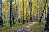 Forest In Fall