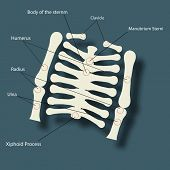 Structure of human backbone skeleton with its parts name description on blue background.
