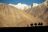 stock photo of karakoram  - silhouette of caravan travellers riding camels Nubra Valley Ladakh  - JPG