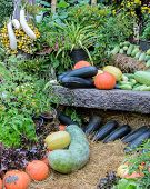 Decorated Ripe Vegetables In The Garden