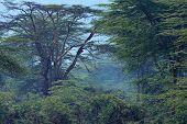 African Forest