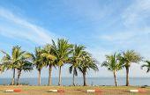 Coconut Palm Tree Along The Lake