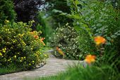 beautiful summer garden view with colorful blooming flowers and bush