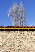 Tree Behind The Wall