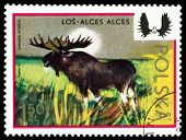 Vintage  Postage Stamp. Moose.