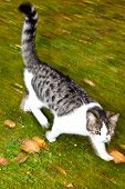 image of catnip  - cute cat has fun in the garden in autumn colors - JPG