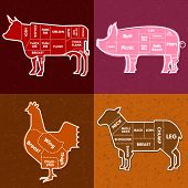picture of lamb shanks  - Vector illustration of beef pork lamb and chicken and cooking tools - JPG