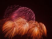 picture of night-blooming  - spectacular beautiful bright powerful fireworks in the form of red and orange flowers bloom in the night black sky - JPG