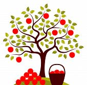 image of apple orchard  - vector apple tree and basket of apples with pile of apples - JPG
