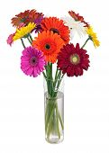 image of vase flowers  - Bouquet from multi colored gerbera flowers in glass vase arrangement centerpiece isolated on white background - JPG