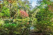 stock photo of azalea  - Beautiful landscaped gardens with reflecting pond azaleas and japanese maple tree - JPG