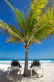 stock photo of beachfront  - Two beach beds under palm tree on caribbean beachfront - JPG
