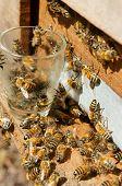 stock photo of beehive  - Beekeeping at Vietnam Vietnamese agriculture group of bee tank group of beehive in Dalat jungle honey is nutrition eating bee working at bee nest - JPG