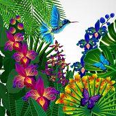 picture of colibri  - Floral design background - JPG