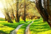 picture of dirt road  - summer forest with sun and dirt road - JPG