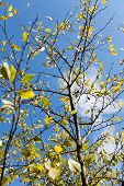 foto of october  - Plum tree at Fall - JPG