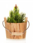 pic of household farm  - Small Christmas tree in wooden bucket isolated on white - JPG