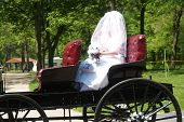 Bride In Carriage