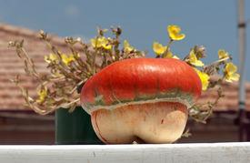 pic of cucurbitaceous  - An ornamental orange pumpkin (Cucurbita maxima) on a terrace ** Note: Shallow depth of field - JPG
