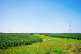 stock photo of power lines  - Wind turbines on a farm in blue skies - JPG