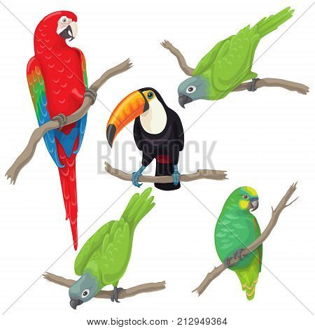 poster of Vivid tropical birds set. Green parrots red-and-green macaw and toucan sitting on branches isolated on white background. Vector flat illustration.