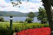 Poppies On Lake George