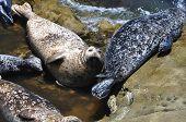 Resting seals