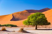 Sossusvlei Namibia, Scenic Clay Salt Flat With Braided Acacia Trees And Majestic Sand Dunes. Namib N poster