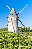 windmill with vineyard near Blaignan, Bordeaux Region, France
