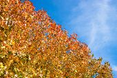 Autumn Leaves And Blue Sky Natural Background