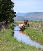 Cavalos em um campo, sul de Oregon.