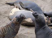 Male Sealion At A Beach